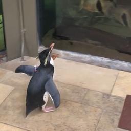 goed-nieuws:-pinguins-verkennen-aquariumpark-en-extra-wie-is-de-mol?