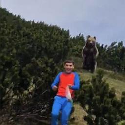 video-|-beer-achtervolgt-kind-tijdens-wandeling-in-italiaans-natuurgebied