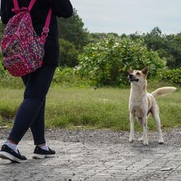 brit-die-bij-vluchten-voor-hond-in-balinese-put-viel-na-zes-dagen-gered