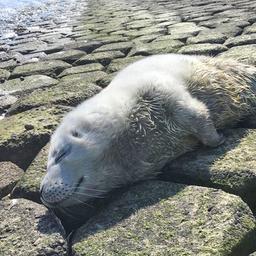 goed-nieuws:-meer-zeehonden-in-waddenzee-|-vitesse-vindt-hoofdsponsor
