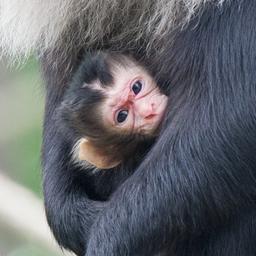 goed-nieuws:-rotterdamse-campus-op-minecraft-|-zeldzame-makaak-geboren