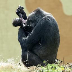 goed-nieuws:-zeldzame-dieren-geboren-|-geliefde-van-buiten-eu-weer-welkom