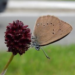 goed-nieuws:-nederland-spot-vlinders-|-veel-leverdonoren-voor-jongens