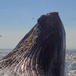 video-|-walvis-overdondert-vissers-en-komt-recht-naast-boot-omhoog