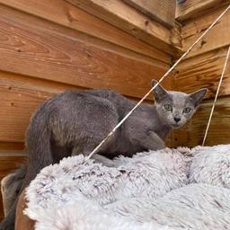 kat-uit-schotland-na-wekenlange-zwerftocht-door-westland-terug-bij-baasjes