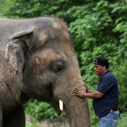 goed-nieuws:-vacaturemarkt-herstelt-|-eenzame-olifant-mag-verhuizen