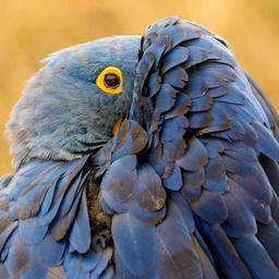 ballonvaarder-moet-65.000-euro-betalen-wegens-dood-van-drie-papegaaien