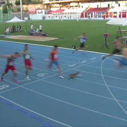 video-|-zwerfkat-sprint-over-finish-tijdens-atletiekwedstrijd-in-turkije
