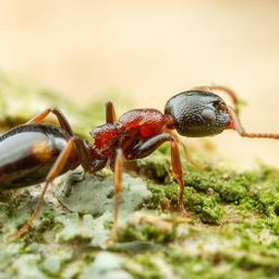 goed-nieuws:-nieuwe-mier-ontdekt-|-china-en-eu-beschermen-eigen-producten