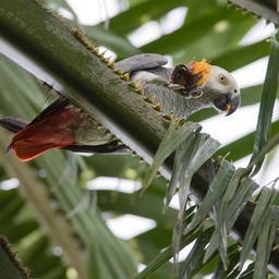 britse-dierentuin-verplaatst-papegaaien-die-constant-bezoekers-afkraken