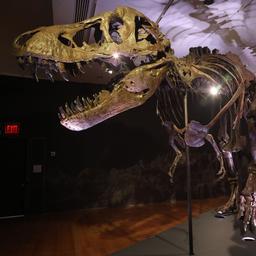skelet-van-tyrannosaurus-rex-levert-27-miljoen-euro-op