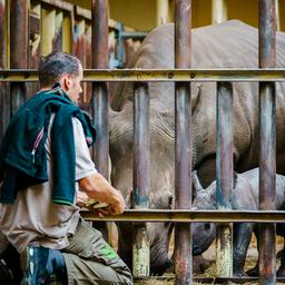 goed-nieuws:-witte-neushoorn-geboren- -testcapaciteit-verder-uitgebreid
