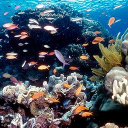 goed-nieuws:-gigantisch-koraalrif-ontdekt-|-historische-tram-keert-terug
