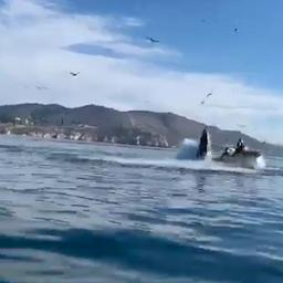 video-|-kayakkers-in-californie-bijna-opgeslokt-door-bultrugwalvis
