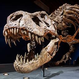 er-zouden-bijna-2,5-miljard-tyrannosaurus-rexen-op-aarde-geleefd-hebben
