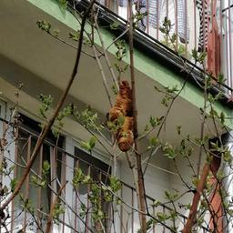 poolse-vrouw-bang-voor-onbekend-schepsel-in-boom,-blijkt-croissant-te-zijn