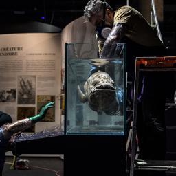 enorme-vis-die-al-sinds-prehistorie-bestaat-kan-100-worden-en-is-5-jaar-zwanger