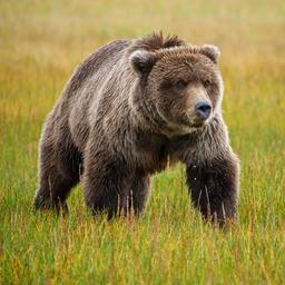 man-in-alaska-gered-na-week-lang-te-zijn-aangevallen-door-grizzlybeer